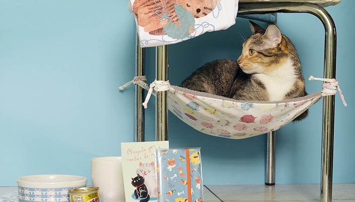 Como não amar a Gato de Apê?