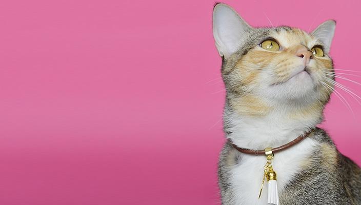 Conheça a Petit, acessórios handmade feitos com MUITO amor para o seu pet