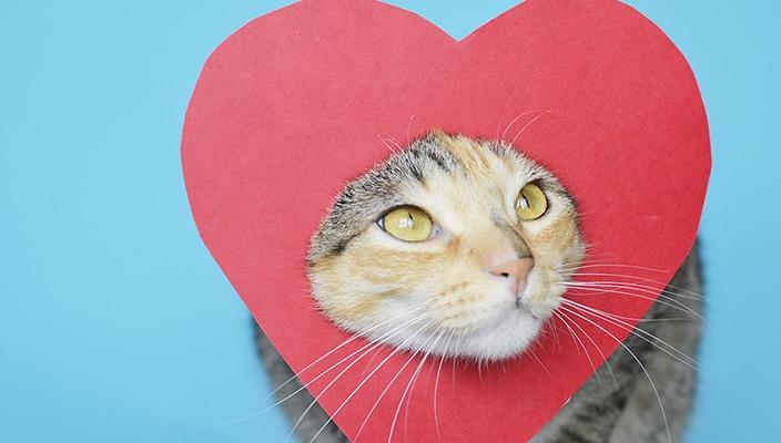 Dicas de Presente para o Dia dos Namorados que todo Catlover iria amar