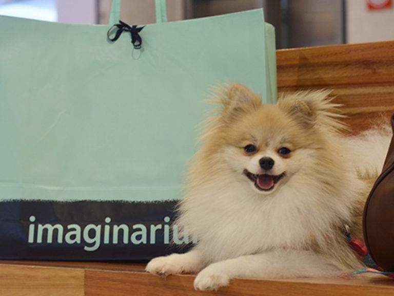 Agora o Shopping Ibirapuera é Pet Friendly