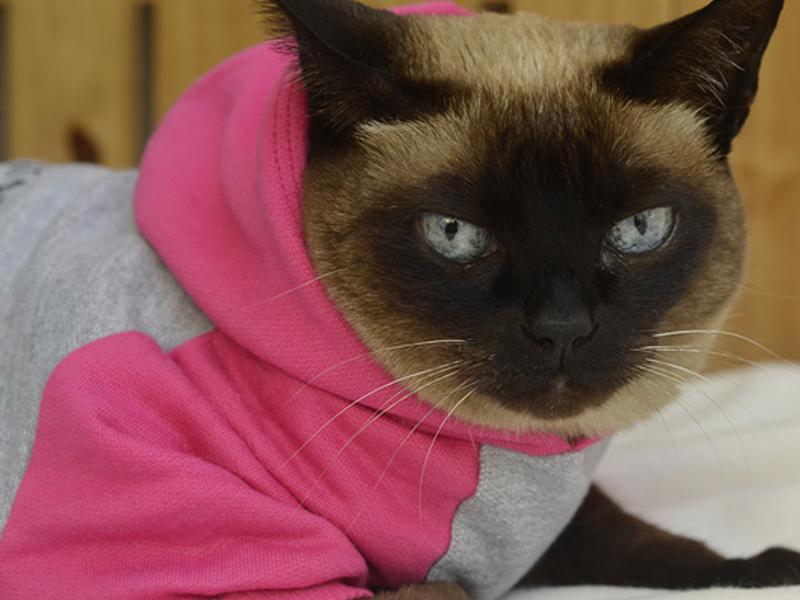 Será que com o frio meu gato deve usar roupa?
